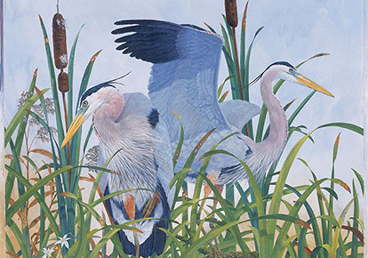 Robin Hill | GREAT BLUE HERONS