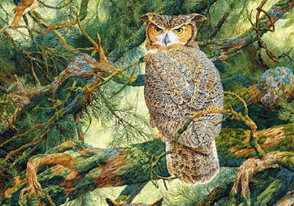 Robin Hill | GREAT HORNED OWLS